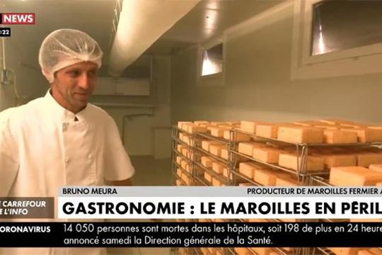 Gastronomie : le Maroilles en péril